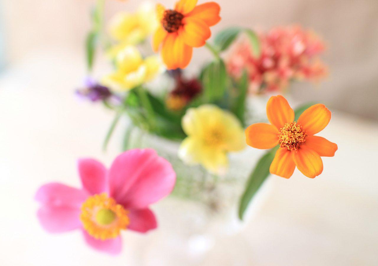 お花を楽しむ はなはなねっと